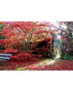 Scottish Tree Festival: Amazing Autumn Colours Guided Walk, 27 Sept