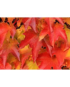 Autumn Splendour Tea & Tour - Wednesday 20th October