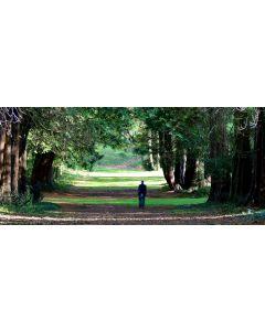 Scottish Tree Festival: Towering Trees Guided Walk, 25 Oct