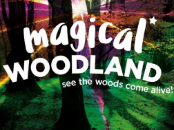 Magical Woodland 2019