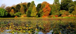 Scottish Tree Festival: Champion Trees Guided Walk, 11 Oct