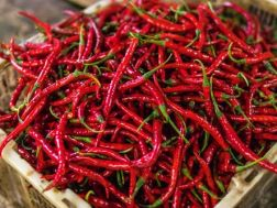 Chilli Fest - 5th & 6th September