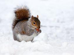 Winter Markets - 6th, 7th & 8th November
