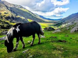 MANCHESTER: North Wales Adventure - Sightseeing Day Trip Tour